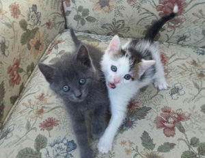 Mickey (on right) and Rosalita (all gray)