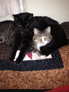 Scampy and Shadow