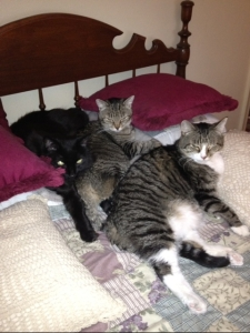 Shadow, Miss Shaina and Lil Scamp